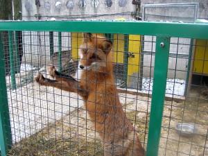 """Центр помощи диким животным """"Велес"""""""